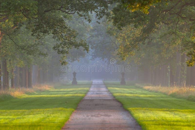 Longue ruelle d'arbre images libres de droits