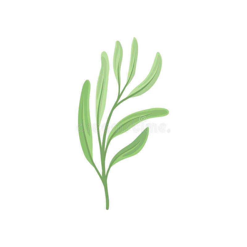 Longues feuilles sur la tige Illustration de vecteur sur le fond blanc illustration libre de droits