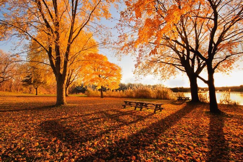 Longues ombres de défunt automne photographie stock