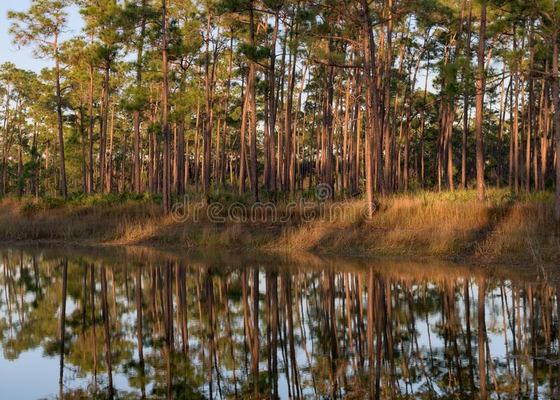 Longues réflexions de forêt de lac key de pin image stock