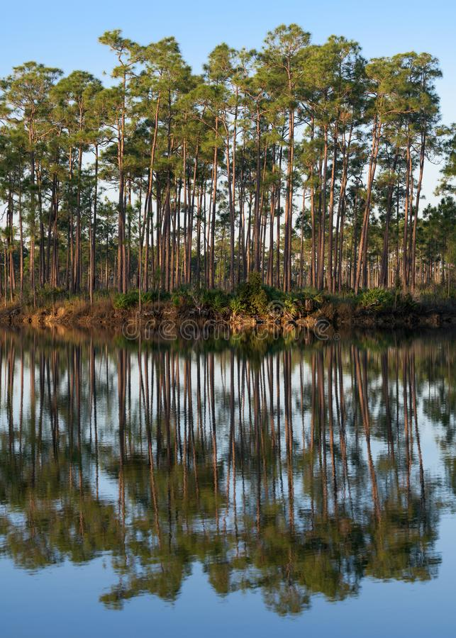 Longues réflexions de lac key de pin photos stock