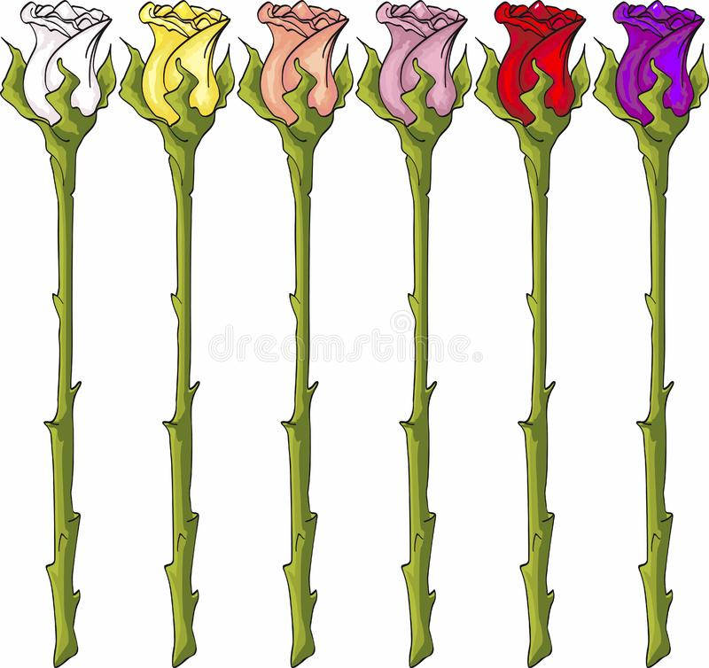 Longues roses de tige photos stock