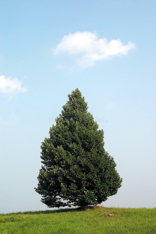Lonley Tree stock photo