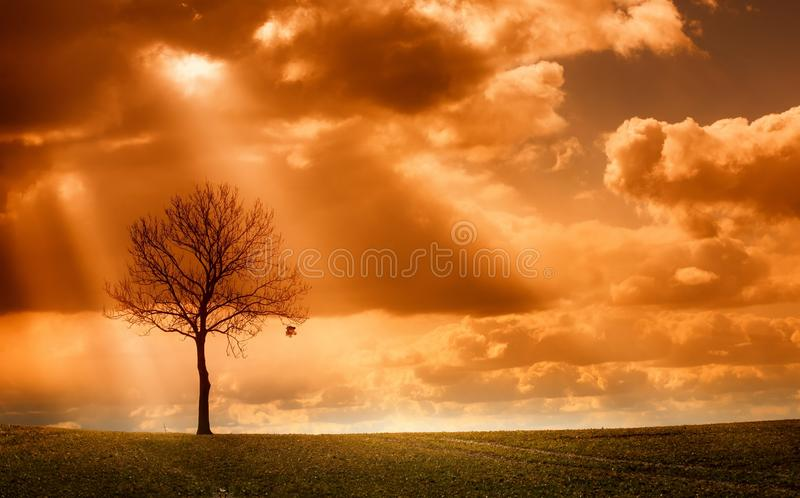 Lonley Tree in Autumn. Tree in field in autumn with last leaf royalty free stock image