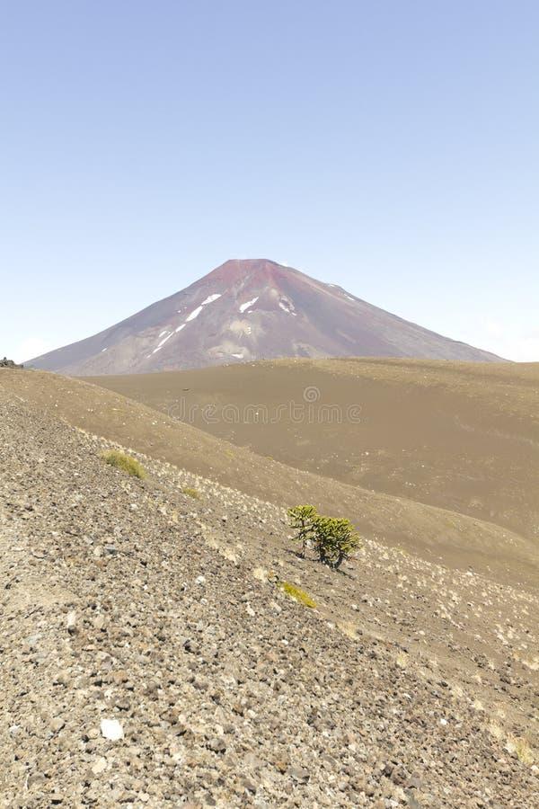 Lonquimayvulkaan, Chili royalty-vrije stock afbeeldingen