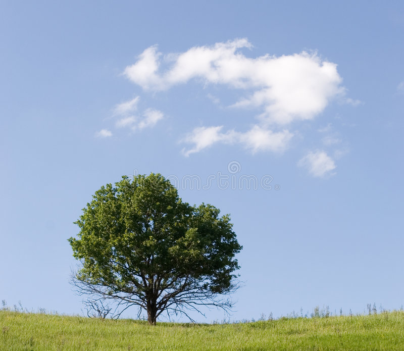 Lonsome tree stock image
