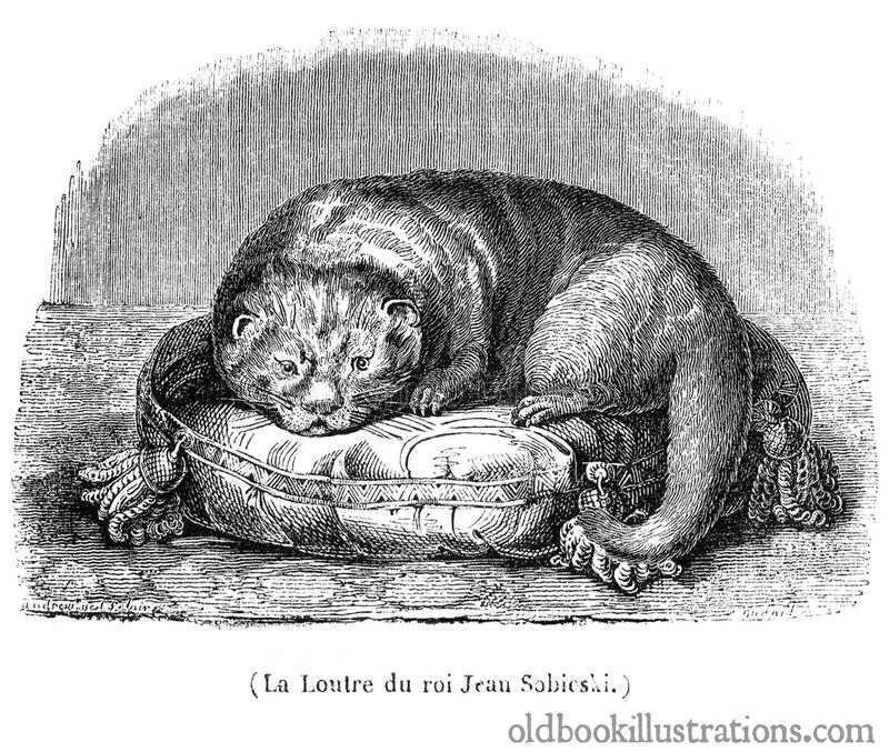 Lontra do rei John III Sobieski's imagem de stock royalty free