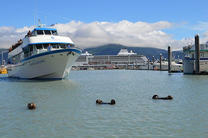 Lontras de mar de Seward Alaska foto de stock