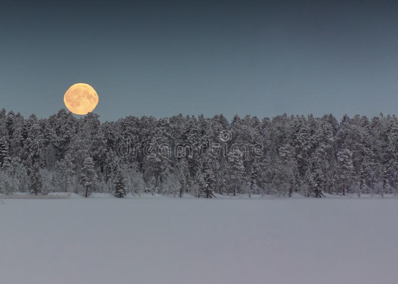 Blood moon hangs in the sky above trees in a snowy, winter, landscape. Finland, Inari- January 2019: Blood moon hangs in the sky above trees in a snowy, winter stock image