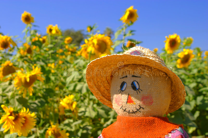 Download The Look of Autumn stock photo. Image of fall, sunflowers - 30004