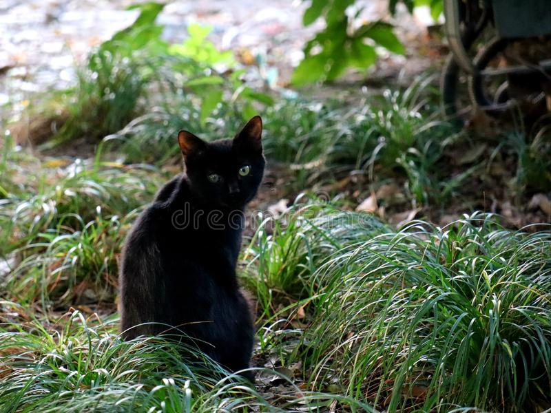 Look ! A black cat on the grass. Kittys royalty free stock photo