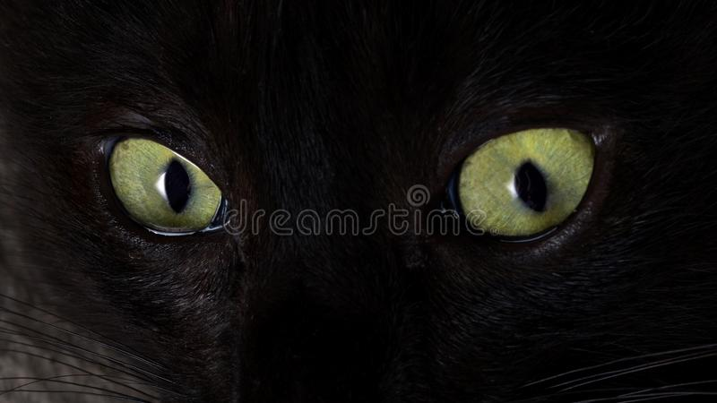 The look of a black cat. Green cat eyes. Selective focus stock photography