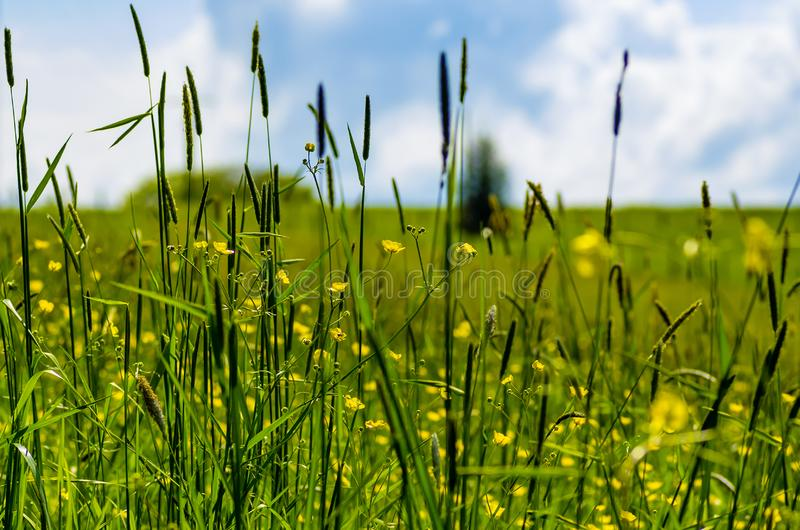 Look through blades of grass over a meadow, sky in the background, selective focus stock photo