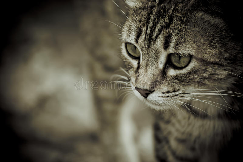 The look of the cat. Eyes of a cat that bit the prey royalty free stock photos