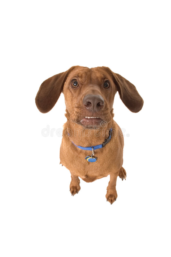 Look at those ears royalty free stock image