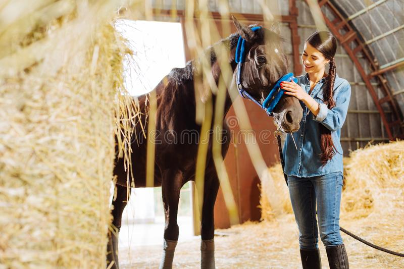 Horsewoman with long dark braid looking at her racing horse. Look at horse. Beautiful appealing horsewoman with long dark braid looking at her dark racing horse royalty free stock photo