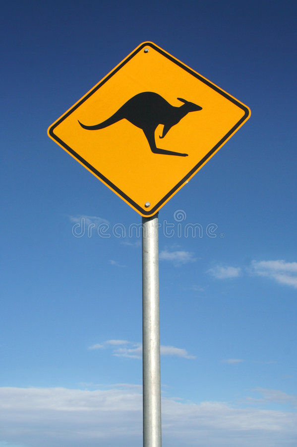 Look out for roos royalty free stock photography