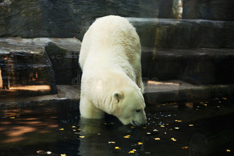 Look polar foto de stock