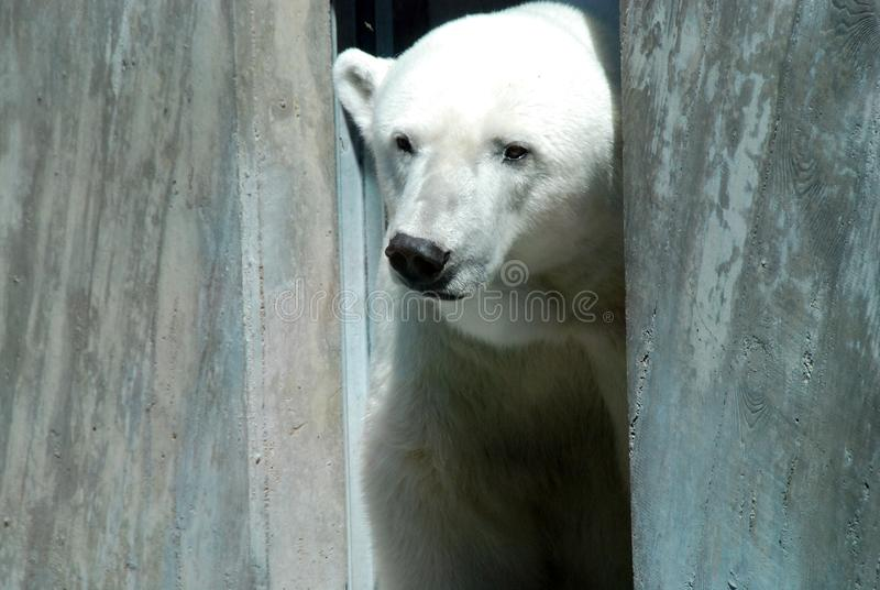 Look polar imagem de stock royalty free