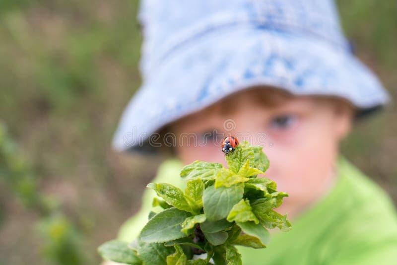 look red ladybird