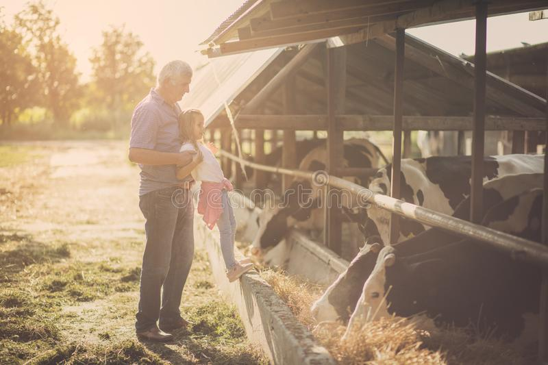 Look at them closely. Granddaughter and grandfather on the farm together. Close up. Copy space stock photography