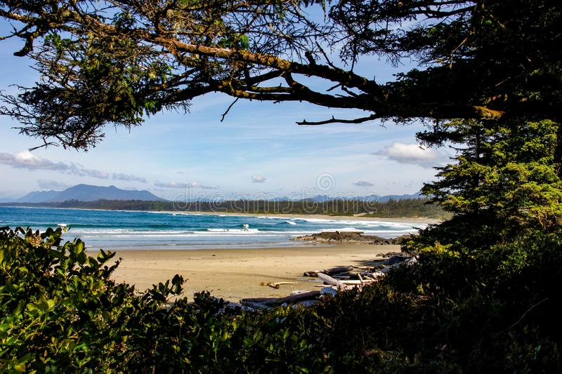 Pacific rim national park. Look at ocean and mountains through the rain forrest. Look through trees from rain forrest onto Pacific ocean, beach, and mountains royalty free stock photography