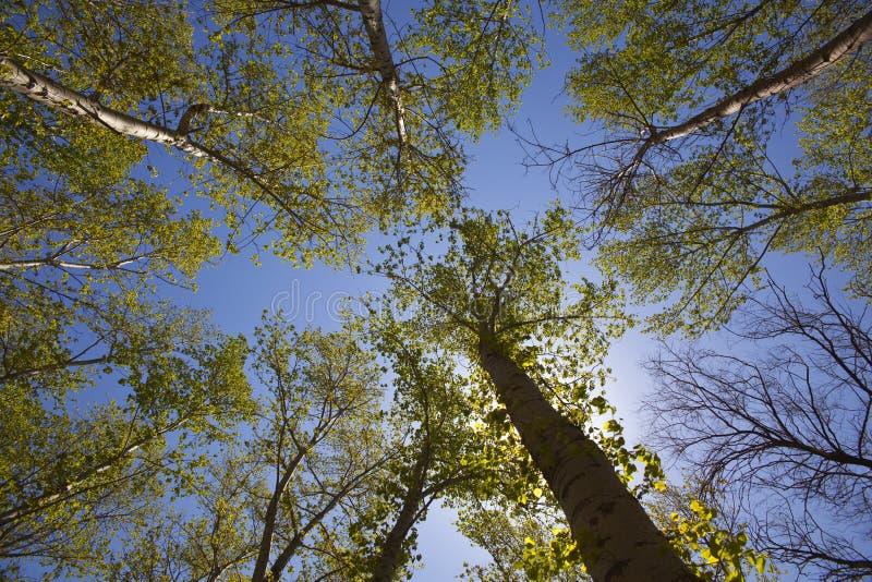 popular trees stock photography