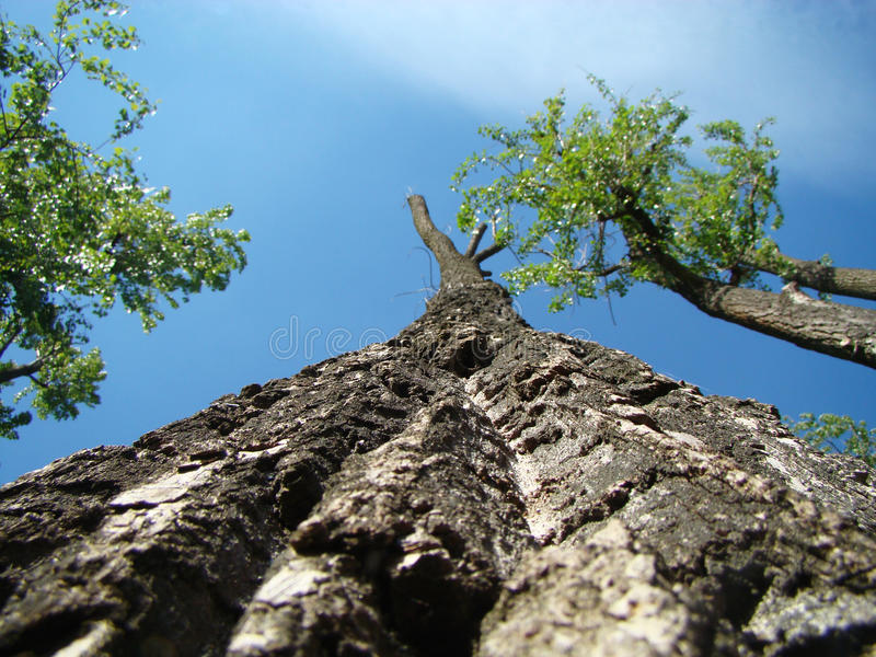Look up! royalty free stock image