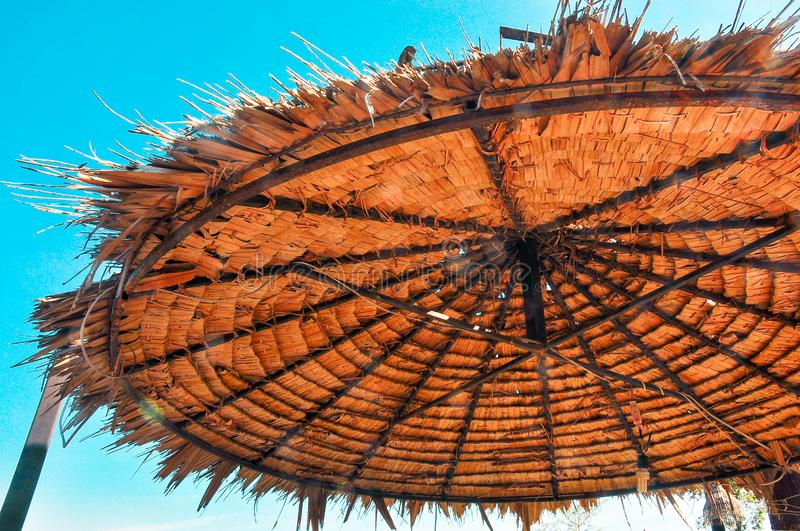 Look upward into leaf roof and blue sky royalty free stock photo