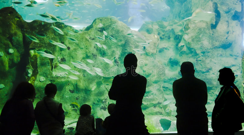 Looking the Acquarium royalty free stock image