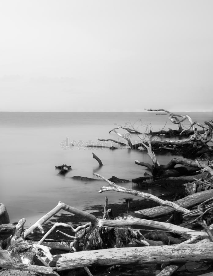 Looking across the Atlantic Ocean toward the horizon with driftwood in the foreground, in black & white, Fire Island, NY. Looking across the Atlantic Ocean royalty free stock photography