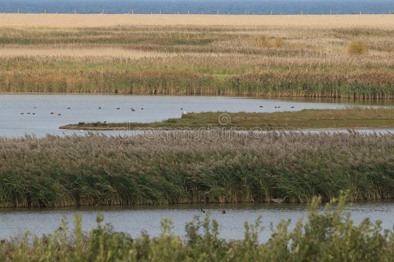 Salt marshes at Cley. Looking across the salt marshes to the sea.NWT Cley Marshes is Norfolk Wildlife Trust's oldest and best known nature reserve. It was royalty free stock images