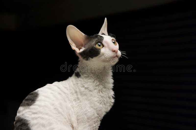 Looking attentively royalty free stock images