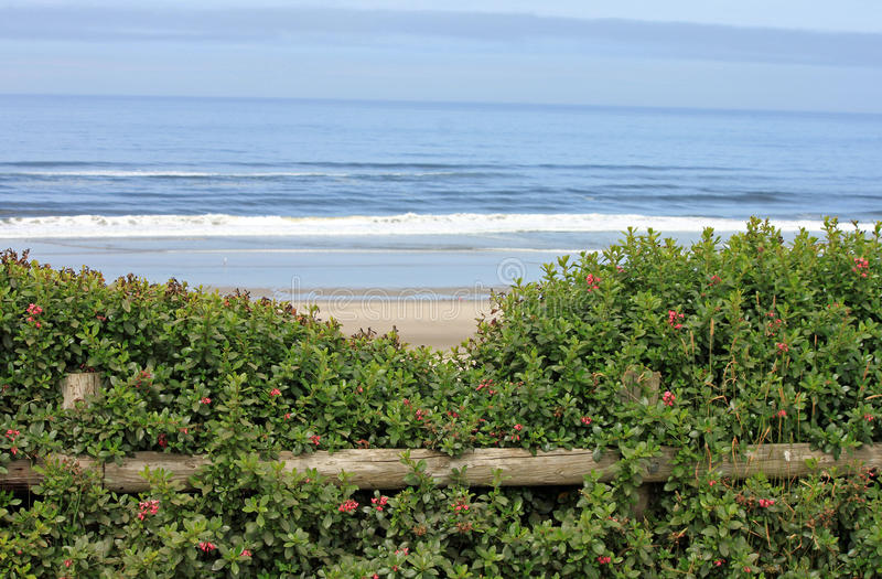 Looking Beyond a Wooden Fence to the Ocean. Looking Beyond a Wooden Fence and Bushes to the Ocean stock image