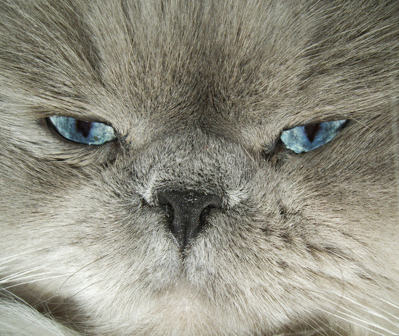 Looking cat eyes stock images