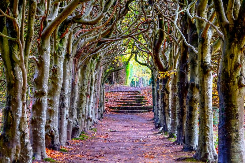 Looking down the centre of a tree lined pathway. Looking down the middle of a tree lined pathway, the treea are old a knarled the top of the trees are wound royalty free stock photography