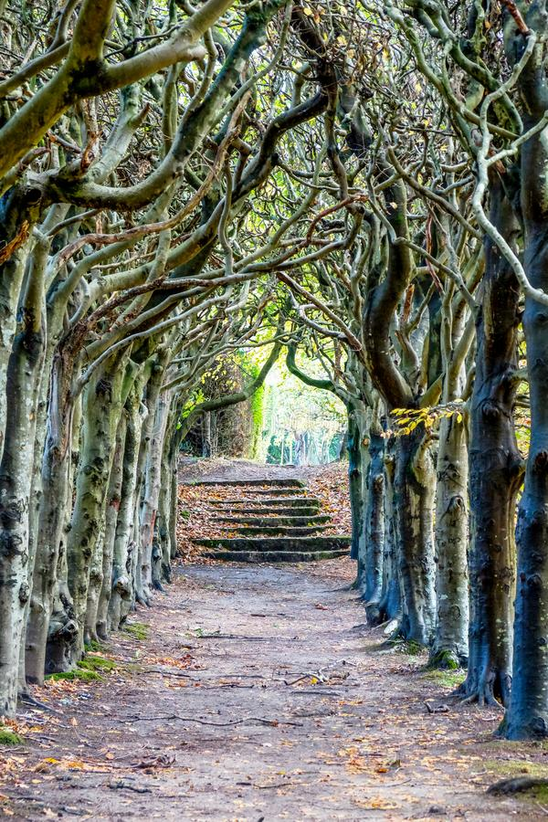 Looking down the centre of a tree lined pathway. Looking down the middle of a tree lined pathway, the treea are old a knarled the top of the trees are wound stock image