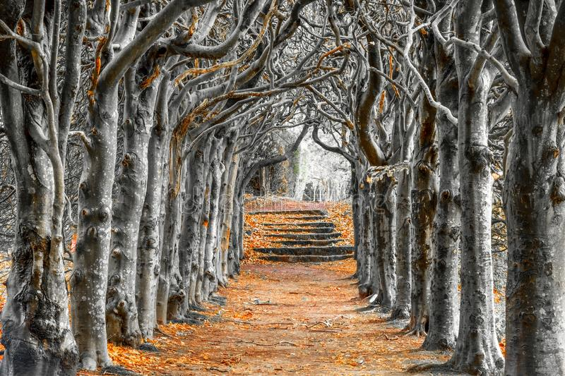 Looking down the centre of a tree lined pathway. Looking down the middle of a tree lined pathway, the treea are old a knarled the top of the trees are wound stock photography