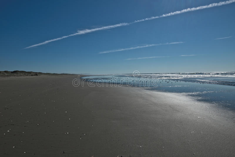 Looking down flat beach with flock of birds royalty free stock photography