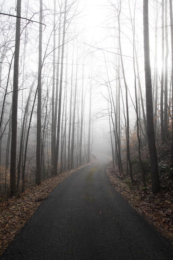 Looking Down a Rural Drive on a Foggy Morning royalty free stock photo