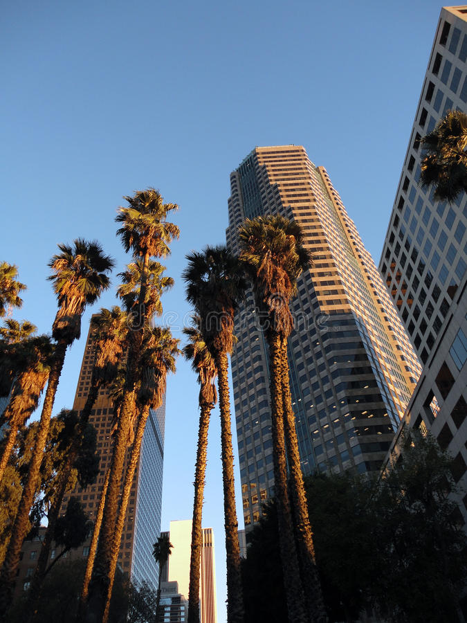Looking at Downtown LA Buildings and Palm trees. Looking up at Downtown LA Buildings and Palm trees at dusk with shadows casting down the street stock image