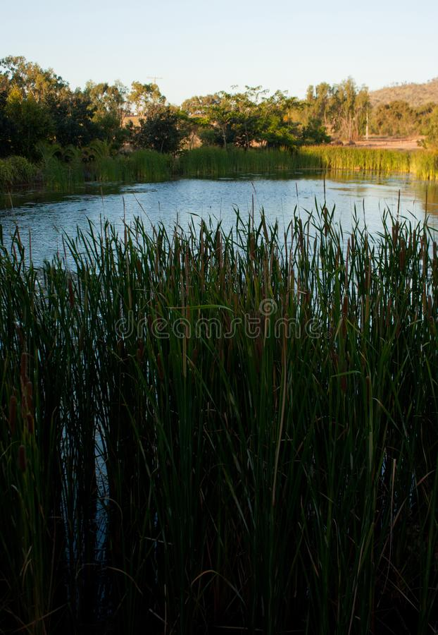 Looking through the grass at a pond in the tropical Queensland stock photography