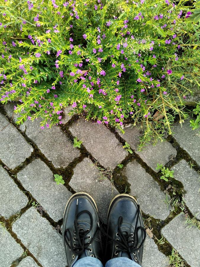 Looking at the grassflower. Look, admiring, standing, stand, shoes, purple, littleflower stock photography