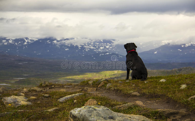 Looking at the lands royalty free stock photo