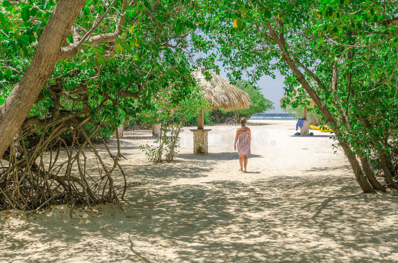 Looking through the mangrove trees in Aruba beach royalty free stock photography