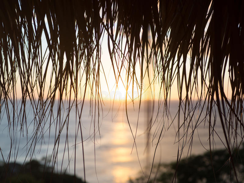 Paradise through the Palm royalty free stock photo