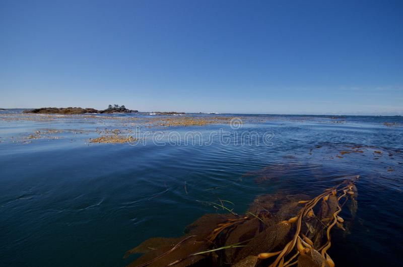 Looking out at the open Pacific from the reefs and kelp beds of Nuchatlitz Provincial Park stock photography