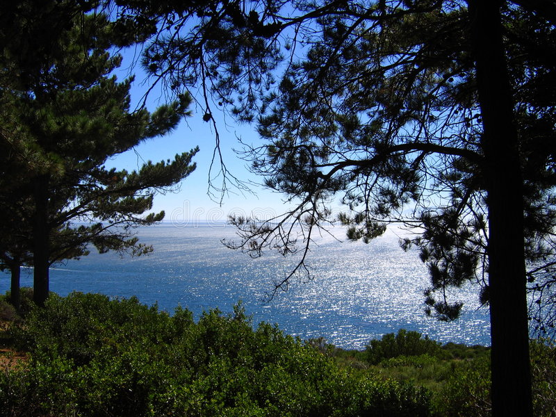 Download Looking out to sea stock image. Image of blue, bush, natural - 2084171