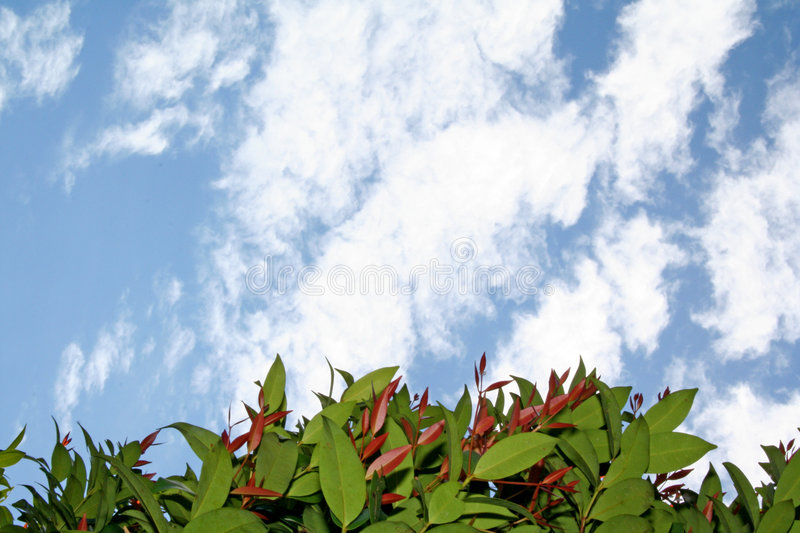 Looking Over The Hedge royalty free stock photos