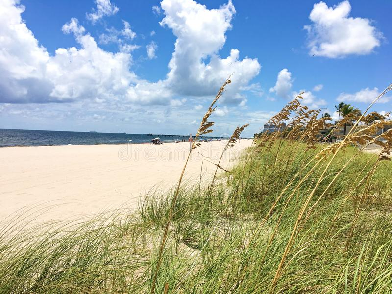 Looking Through Pampas Grass on the Beach in Ft Lauderdale Florida royalty free stock photo